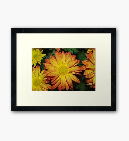 True Colors Framed Print