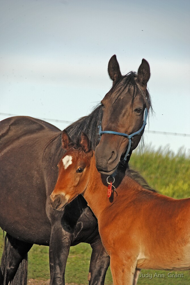 Momma Horse & Babe  by Judy Grant