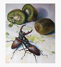 """"""" Kiwis and Stag Beetles ( Struggle for Constancy)"""" Photographic Print"""