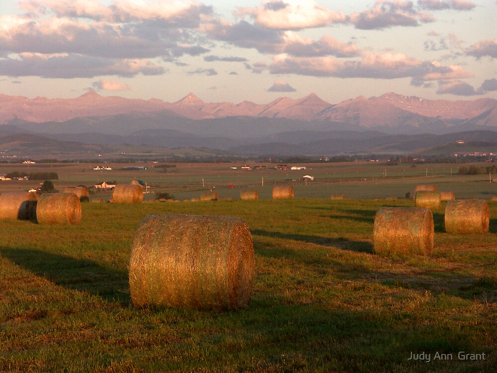 Sunrise in the Alberta Foothills  by Judy Ann  Grant