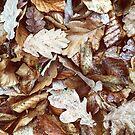 Wet leaves by Noirerora