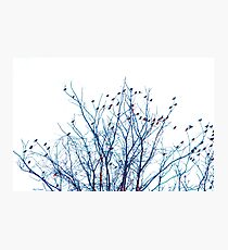 A Partridge in a Pear Tree - Blue Photographic Print