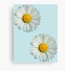 Two white daisies Canvas Print