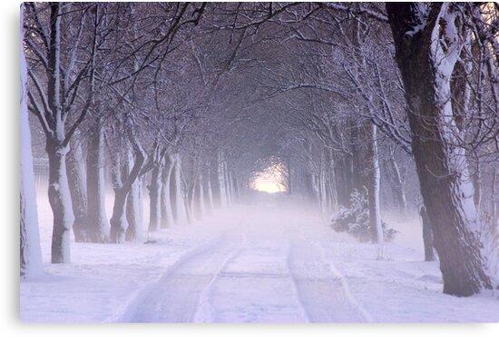 Snowy Winter Alley in Park by Marko Palm