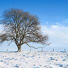 Snow in Eastcombe, Stroud, Gloucestershire by Jeff  Wilson
