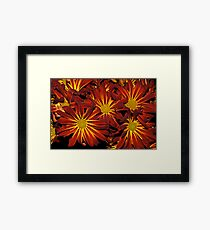 Intense Color Framed Print