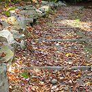 Autumn Steps by Tammy F