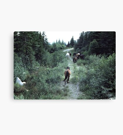 At a horse's pace Canvas Print