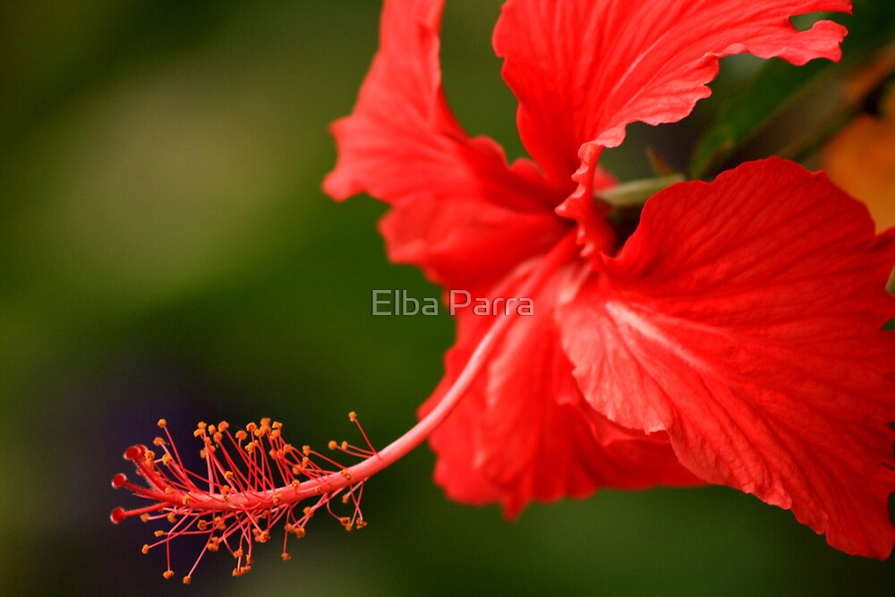 Red... by Elba Parra