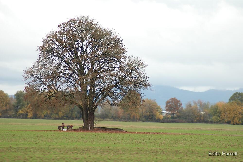 Lone Tree by Edith Farrell