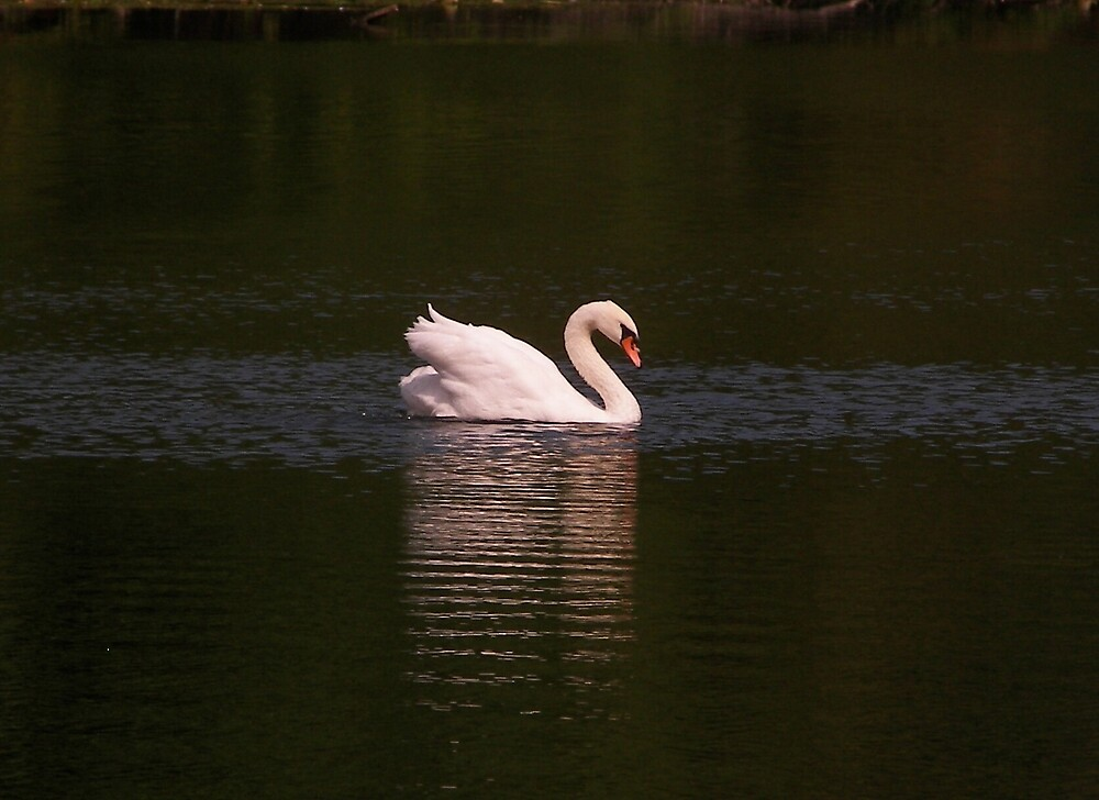 The Swan on Black Lake by madmac57