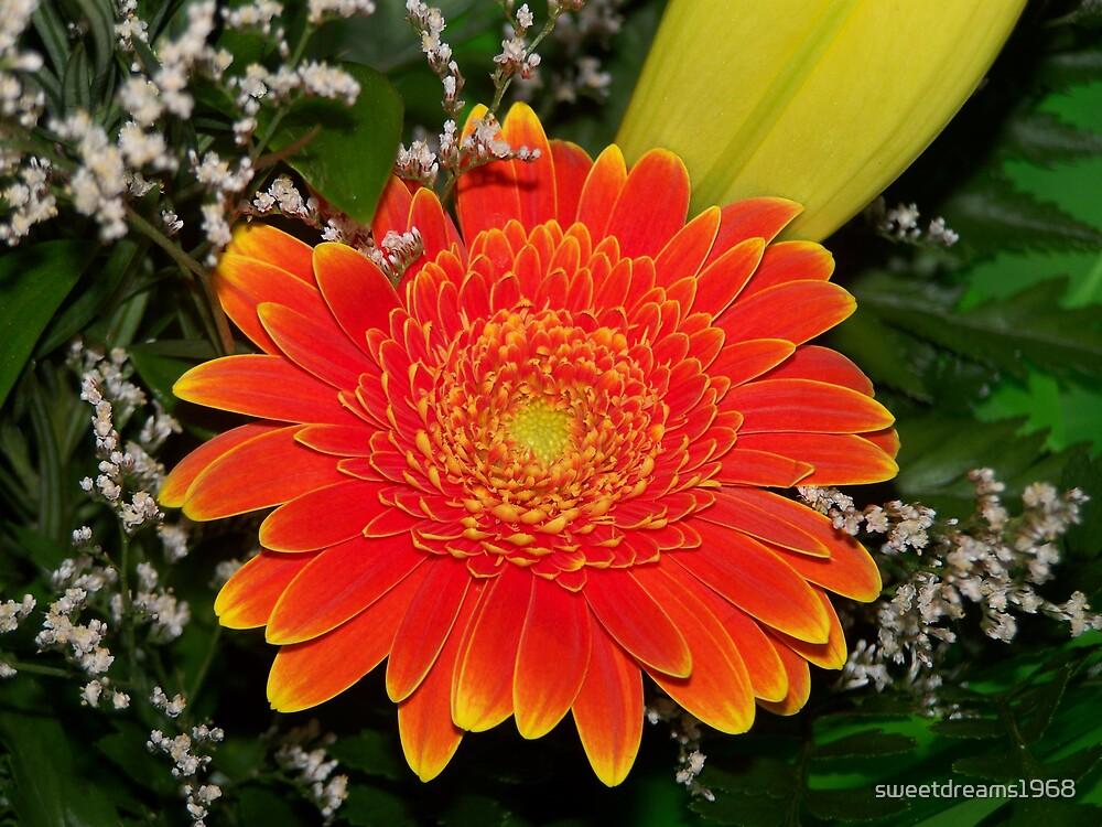 Orange by Carol Field