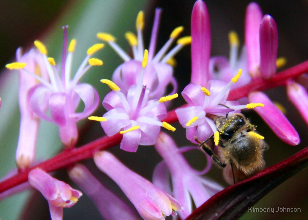 Bee in the Pollen by Kimberly Johnson