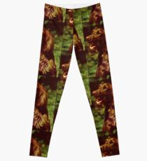irish setter second Leggings