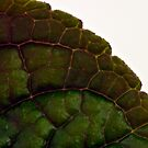 Plecanthrus Leaf Details - Macro  by Sandra Foster