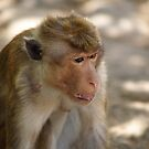 The Me Monkey by Jonathan Dower