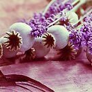 Großer Mohn  mit duftendem Lavendel  by Aviana