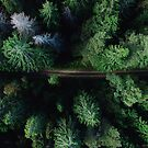 Aerial Forest Green Trees by colorandpattern