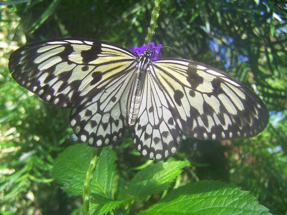 Butterfly by KGMiller