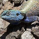 a blue mini dinosaur roaming the garden in zimbabwe by David Kelly