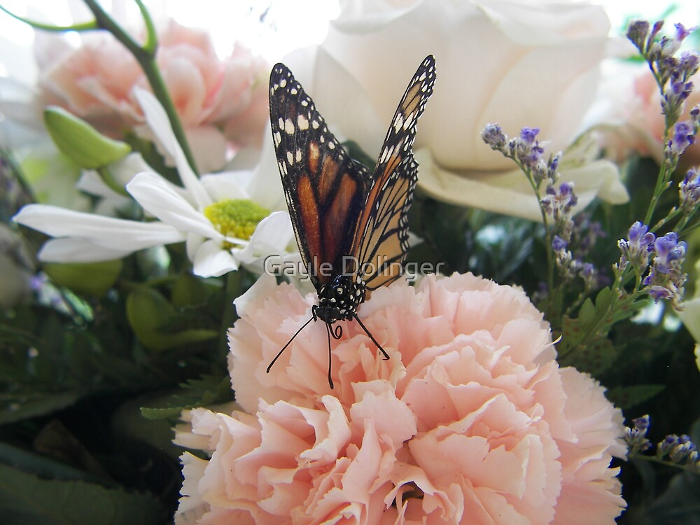 Butterfly and Carnation by Gayle Dolinger