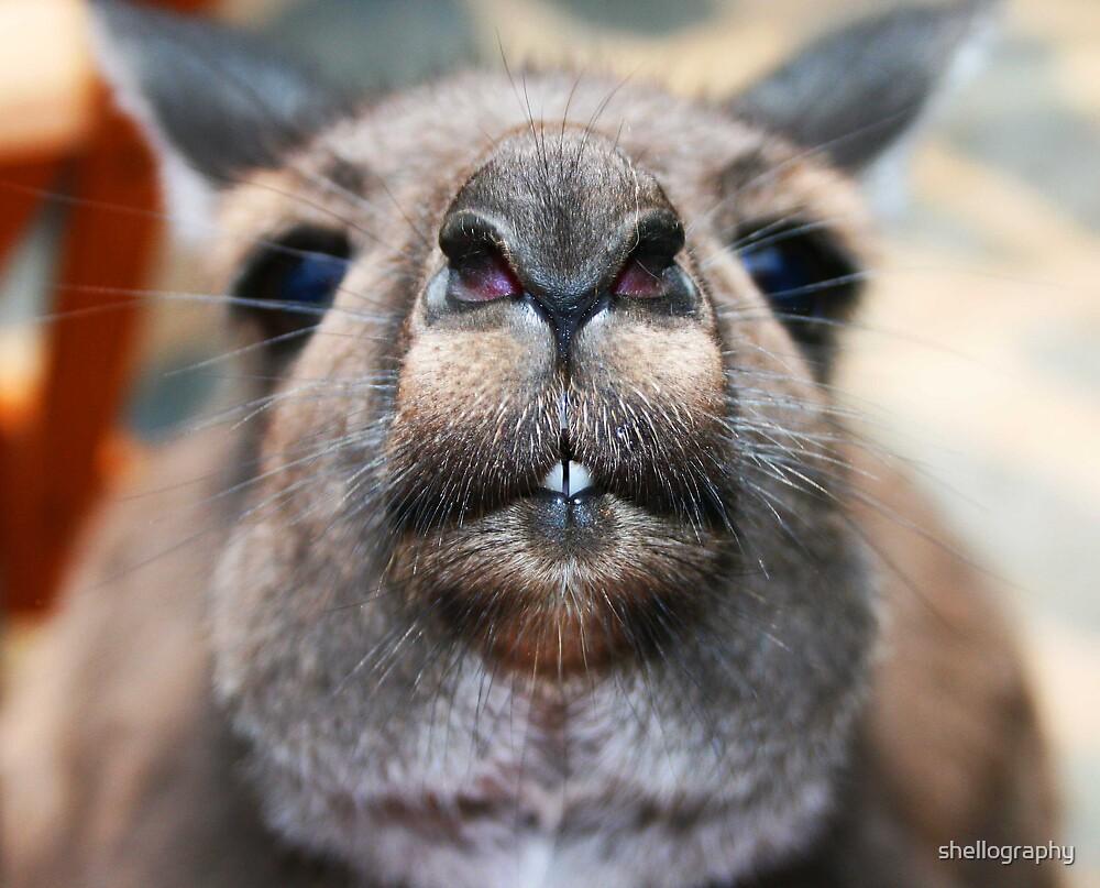 Nosy Kangaroo by shellography