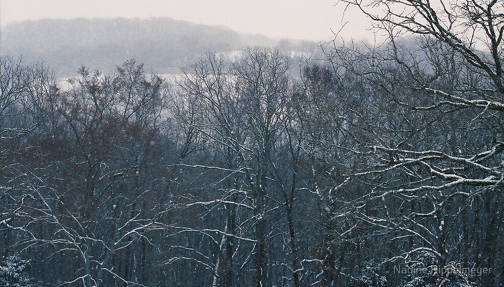 Winter in the Foothills by Nadine Rippelmeyer