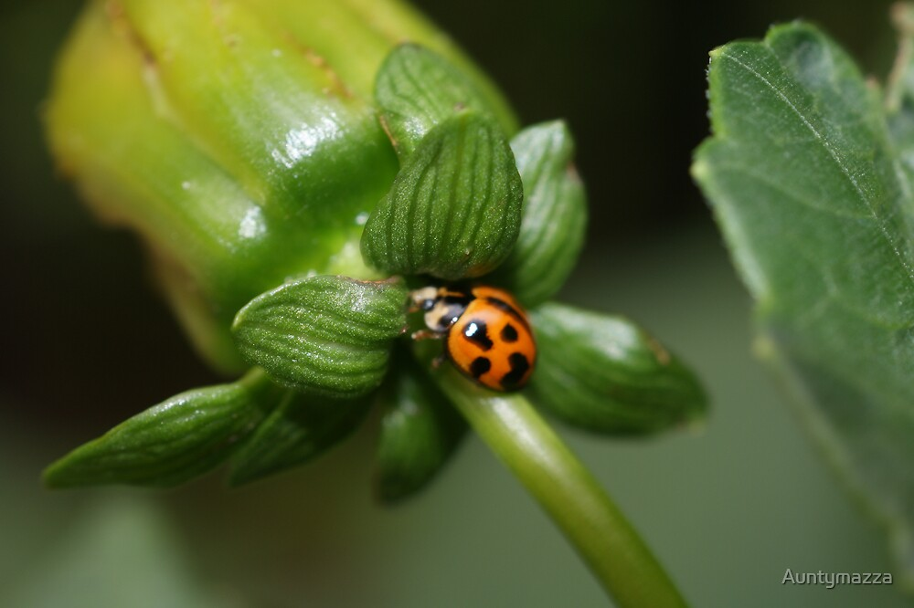 Lady Beetles Home by Auntymazza