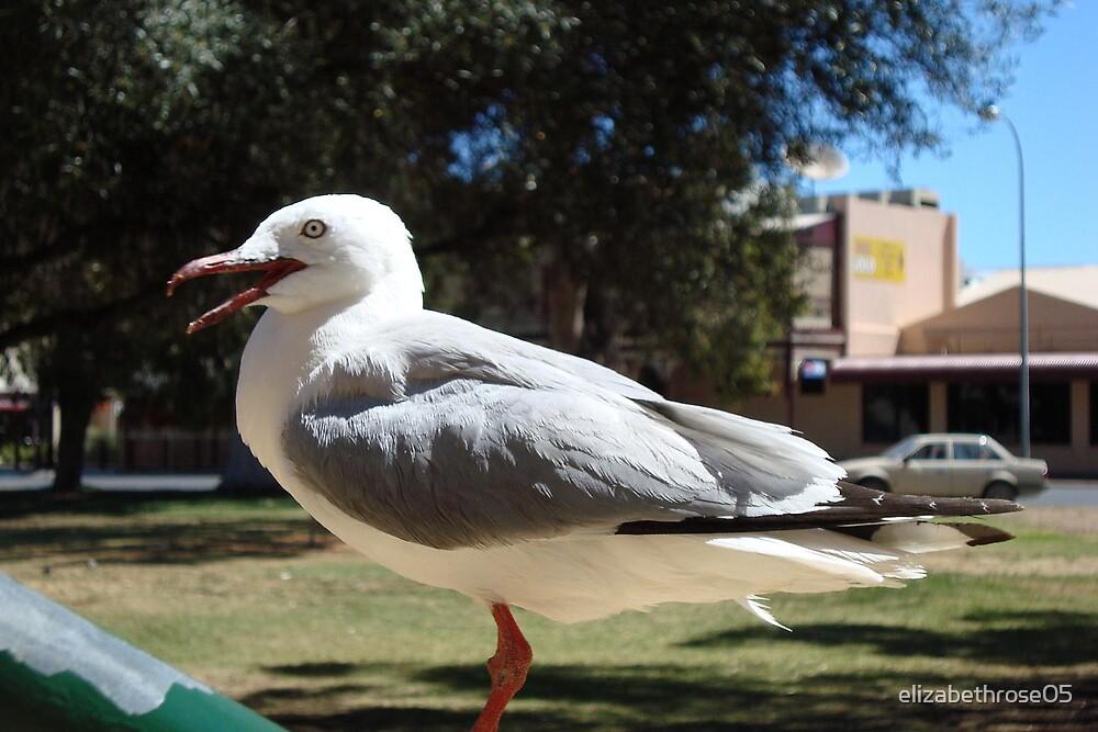 Seagull by elizabethrose05