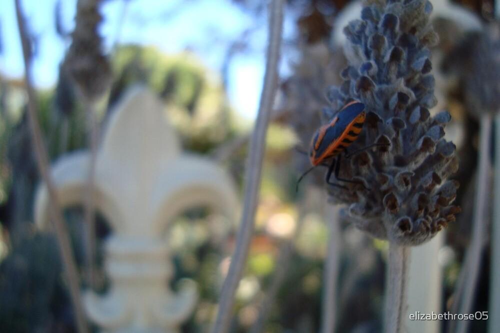 Lavender and a little red bug by elizabethrose05
