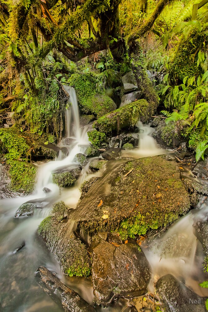 Purakaunui Stream by Neil