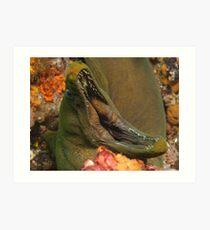 Green Moray Eel Art Print