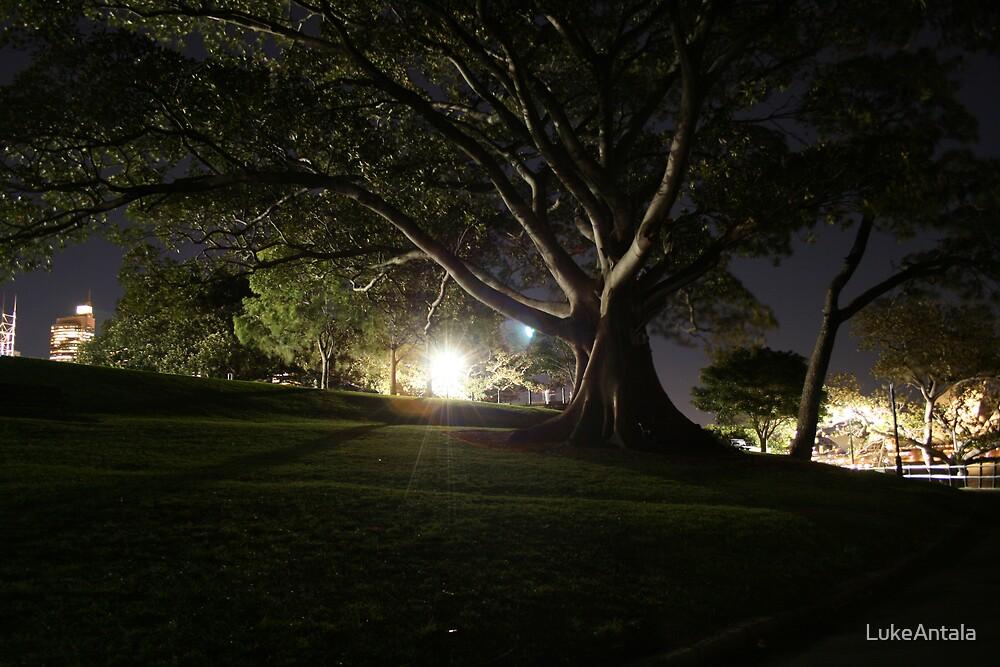 Park by LukeAntala