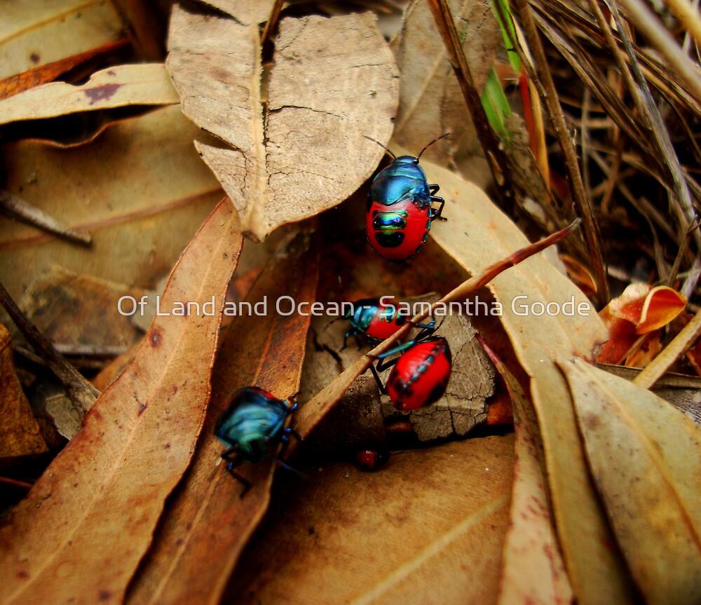 Jewelled Beetles  Ground Shield Bugs - Choerocoris paganus - (best viewed large)  by Of Land & Ocean - Samantha Goode