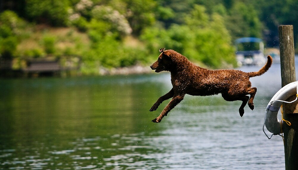 Jump by KerrieT