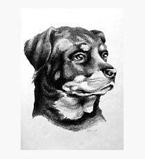 Rottweiler Devotion Photographic Print