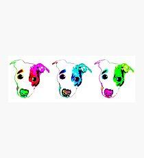 Fun Pups Photographic Print