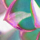Stained Echevaria by morphingdreams