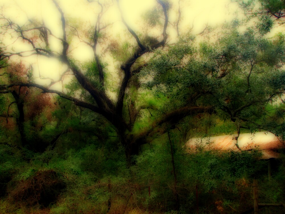 Grand Old Tree by DottieDees