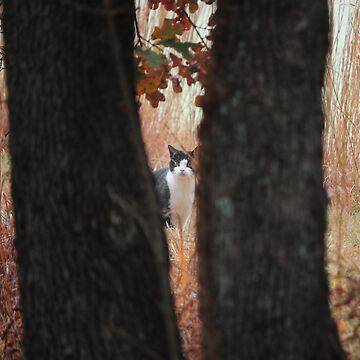 Can You See Me by CjbPhotography
