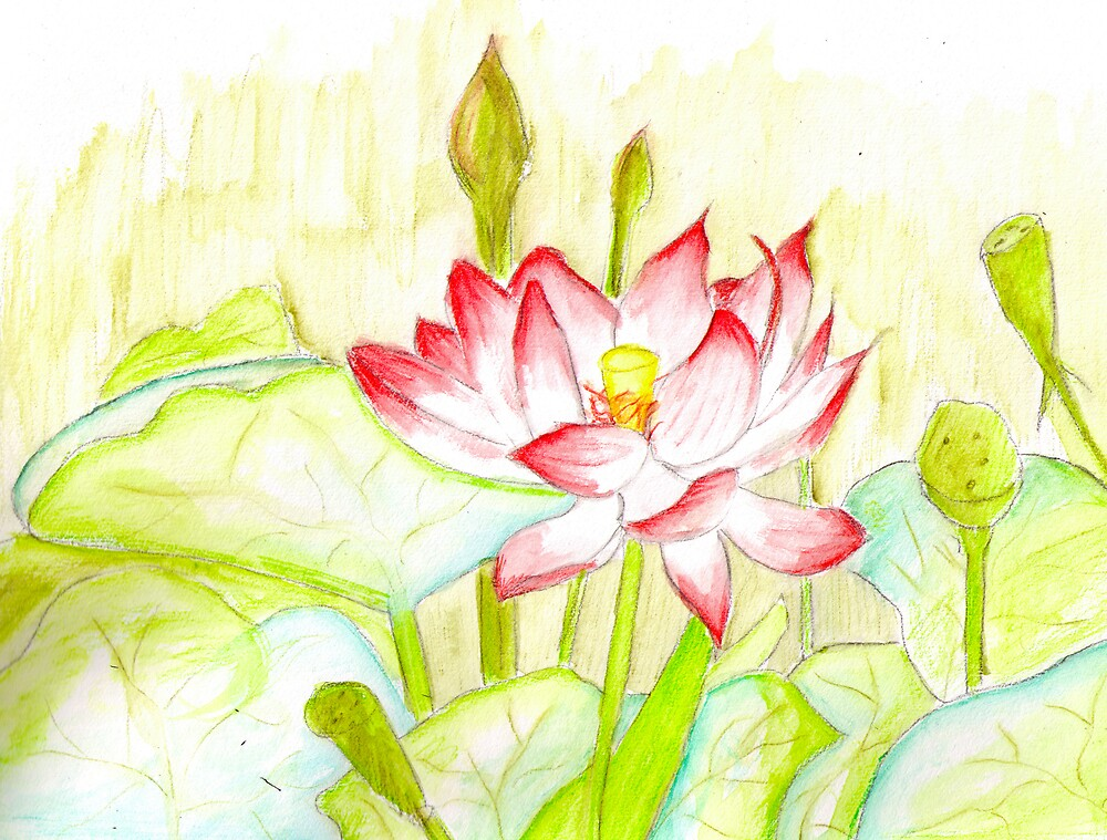 Lotus by Stormswept