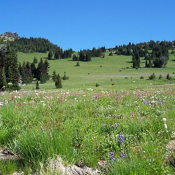 More Wildflowers by KGMiller