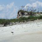 Sea Oats by Bob Hardy