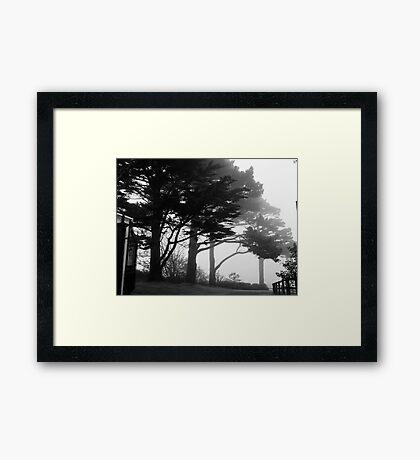 Trees In A Veil Framed Print