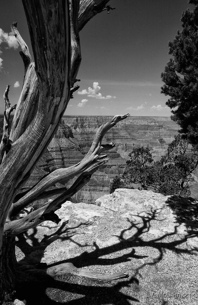 Tree and Shadow by EvaMcDermott