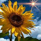 Sunflower Brilliance II by Al Bourassa