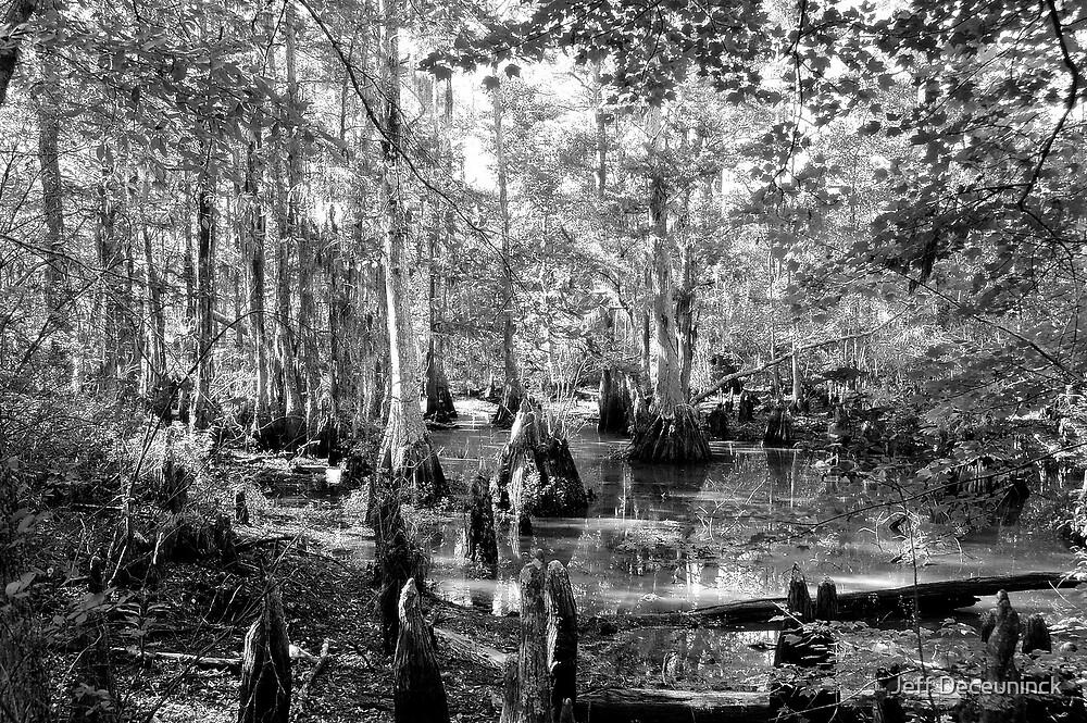 the swamp by Jeff Deceuninck