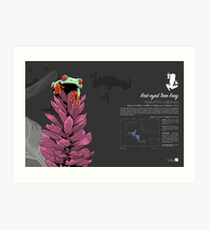 Red-eyed Tree Frog Infographic Art Print