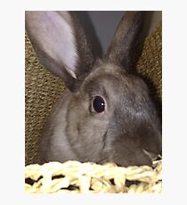 Bunny Photographic Print