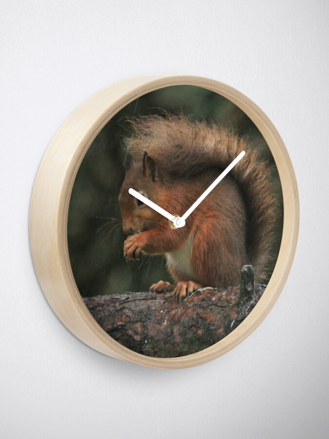 Alternate view of Squirrel shelter Clock